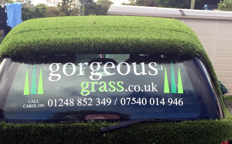 gorgeous-grass-north-wales