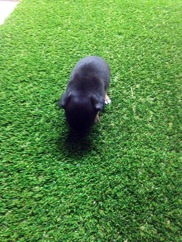 Artificial-Grass-Residential-16