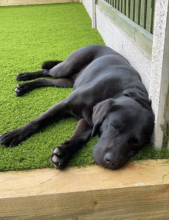Brynn Dog